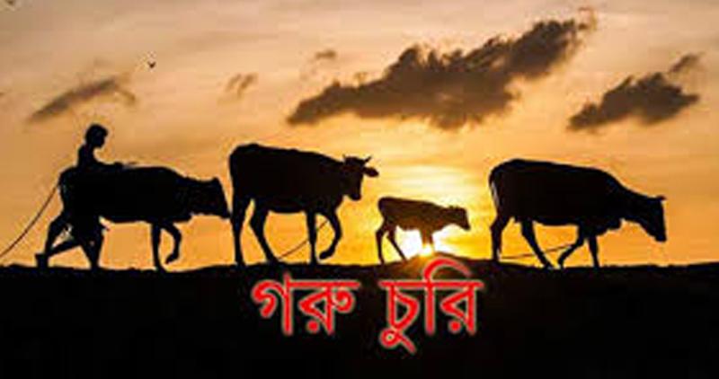 ঈদগাঁওতে ফের সক্রিয় গরু চোর সিন্ডিকেট : জনমনে উৎকন্ঠা