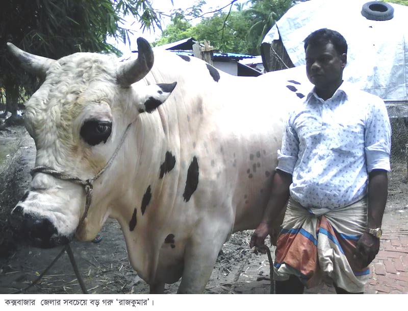 """চকরিয়ায় কোরবানির ঈদে সাড়া ফেলতে আসছে """"রাজকুমার"""""""