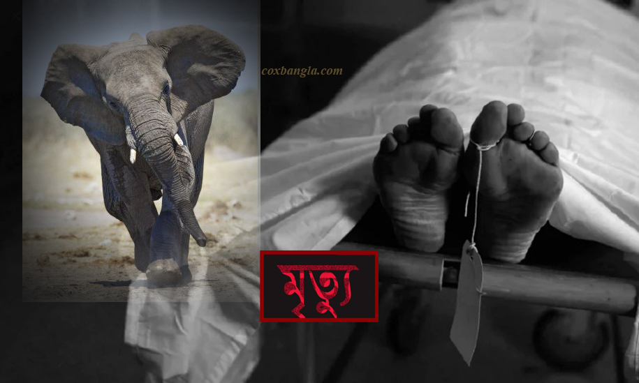 লামায় বন্যহাতির আক্রমণে নারী রাবার শ্রমিকের মৃত্যু