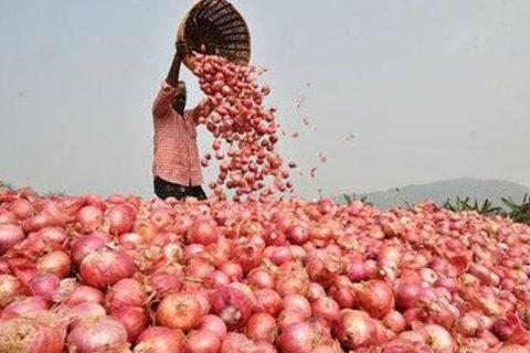বাংলাদেশে ২০ হাজার টন পেঁয়াজ রফতানির অনুমতি ভারতের