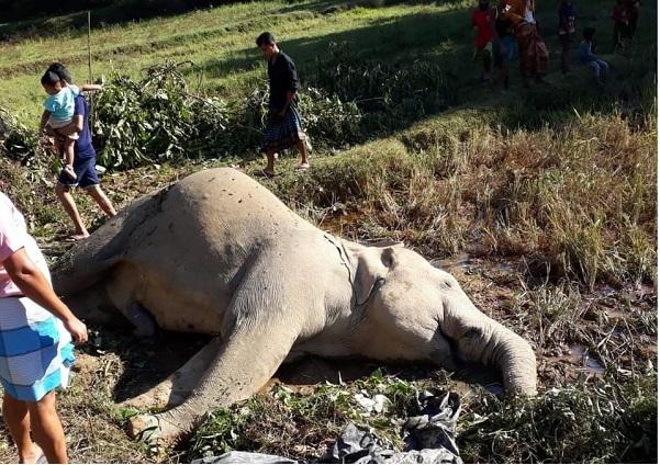 কক্সবাজারের রামুতে বন্য হাতির রহস্যজনক মৃত্যু