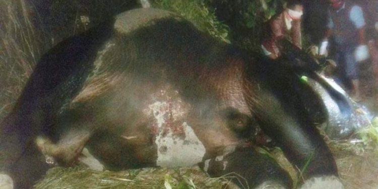 কক্সবাজারের ঈদগাঁওতে আরও এক বন্যহাতির মৃত্যু : বনবিভাগের লুকোচুরি