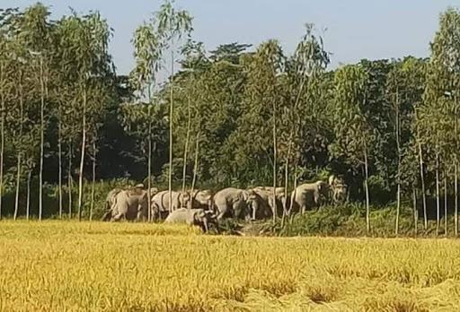 চকরিয়ায় লোকালয়ে দলছুট বন্যহাতি, আক্রমনে বৃদ্ধা আহত