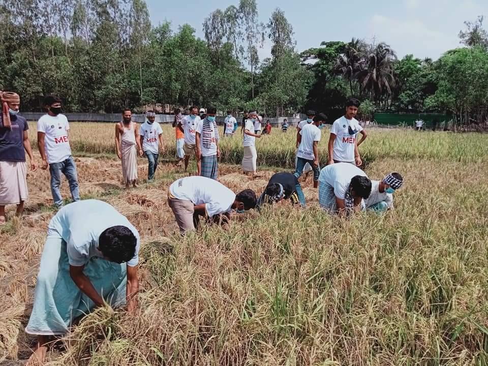 মহেশখালীতে কৃষকের পাকা ধান কেটে ঘরে তুলে দিল উপজেলা ছাত্রলীগ