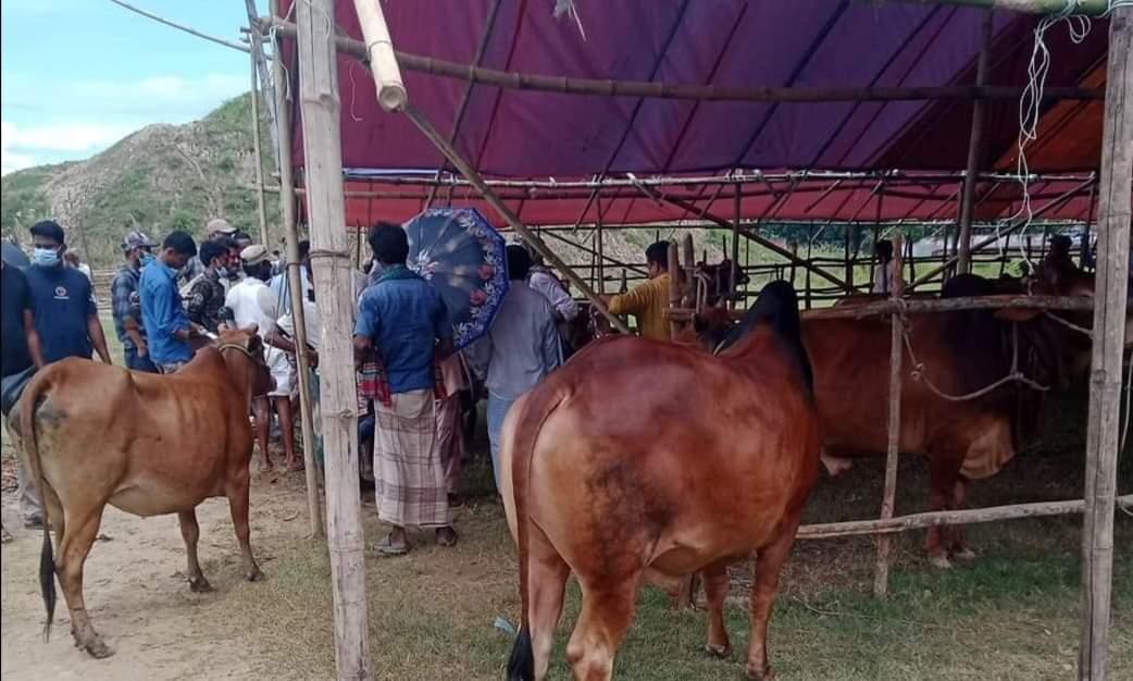 ঈদগাঁওতে পশুরহাটে নেই স্বাস্থ্যবিধি : জনমনে মিশ্র প্রতিক্রিয়া