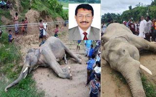 elephant-dead-teknaf-12th-june-rana-article.jpg
