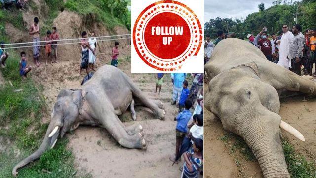 elephant-dead-teknaf-13th-june-follow-up.jpg